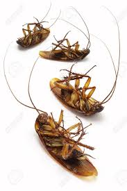 Dad cockroaches