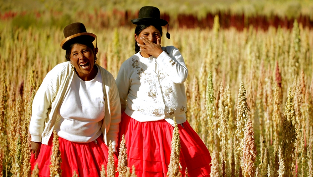Peruvian peasant women in grain field