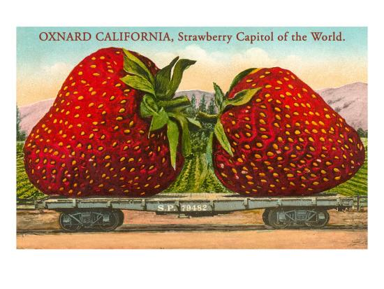 Vintage postcard of giant  strawberries
