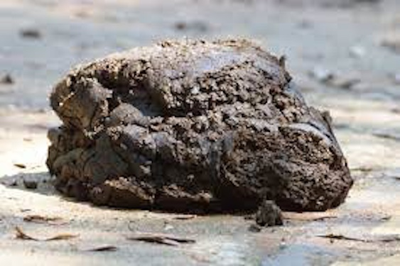 Pile of cow dung